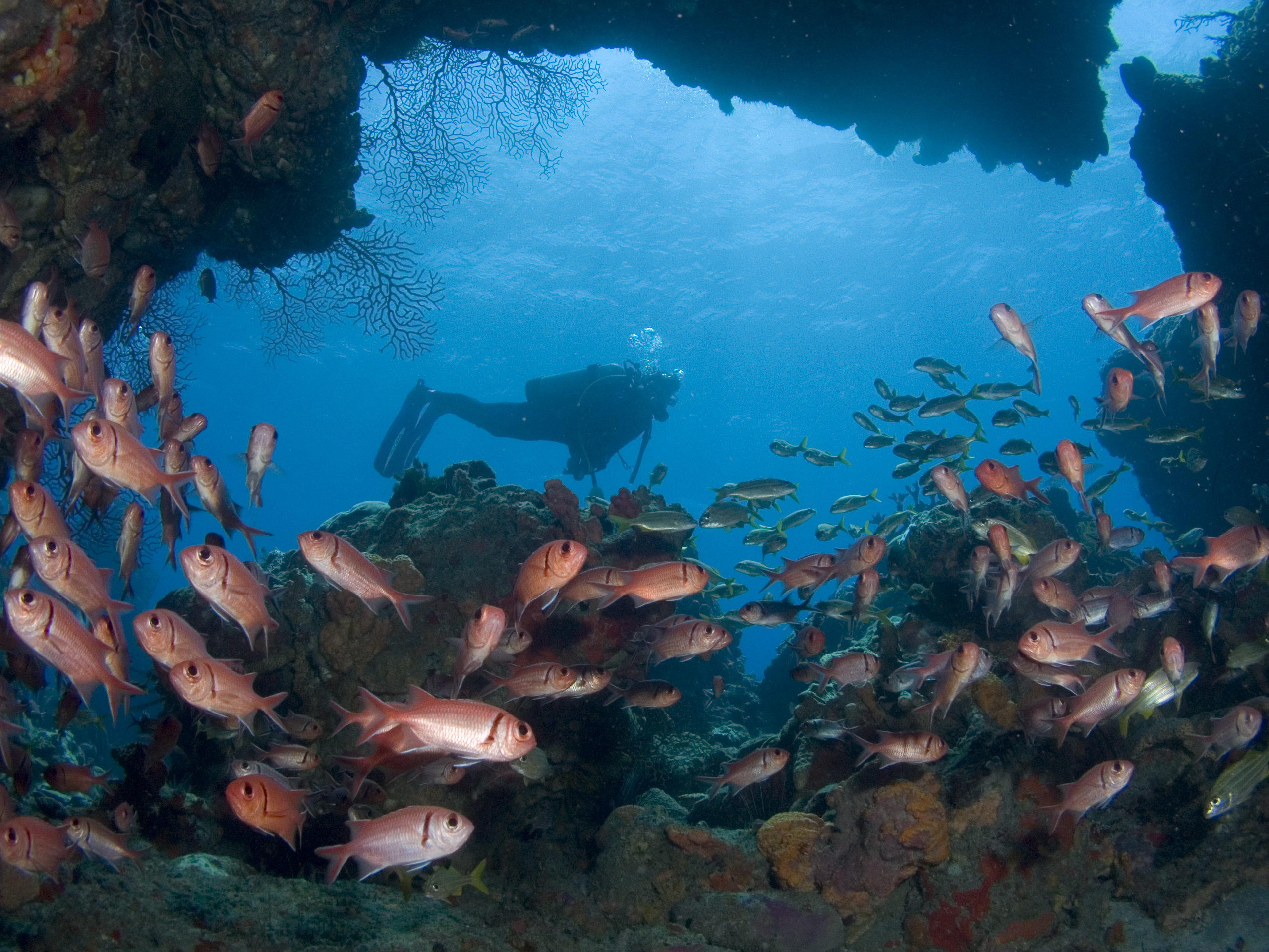 Diver_credit Discover Dominica Authority (1)